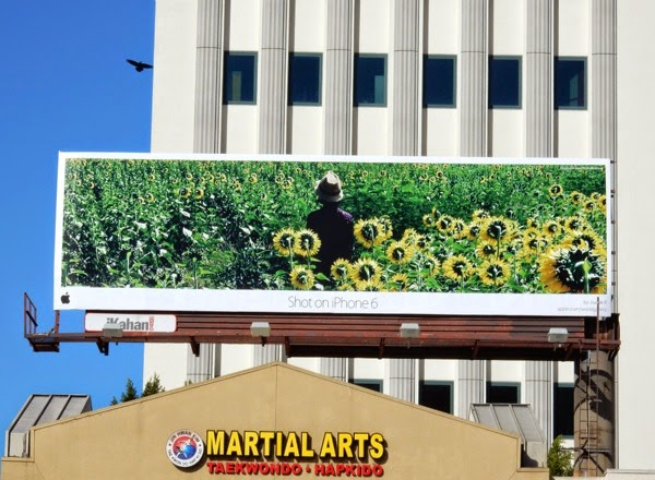 Shot on iPhone 6 sunflowers billboard