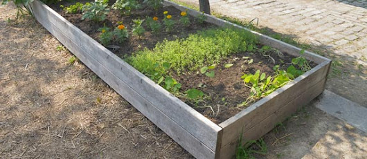 Never Ignore These Tips When Starting Your Home Organic Vegetable Garden