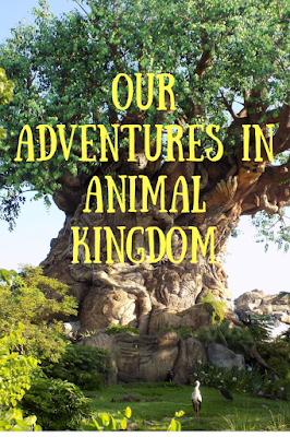 Our adventures in Animal Kingdom