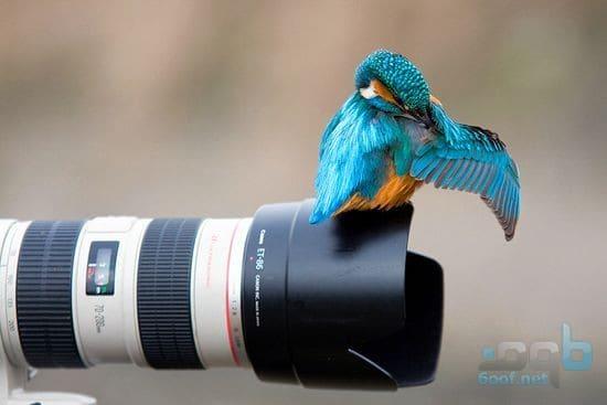 عصفور - أجمل الصور الفوتوغرافية في العالم