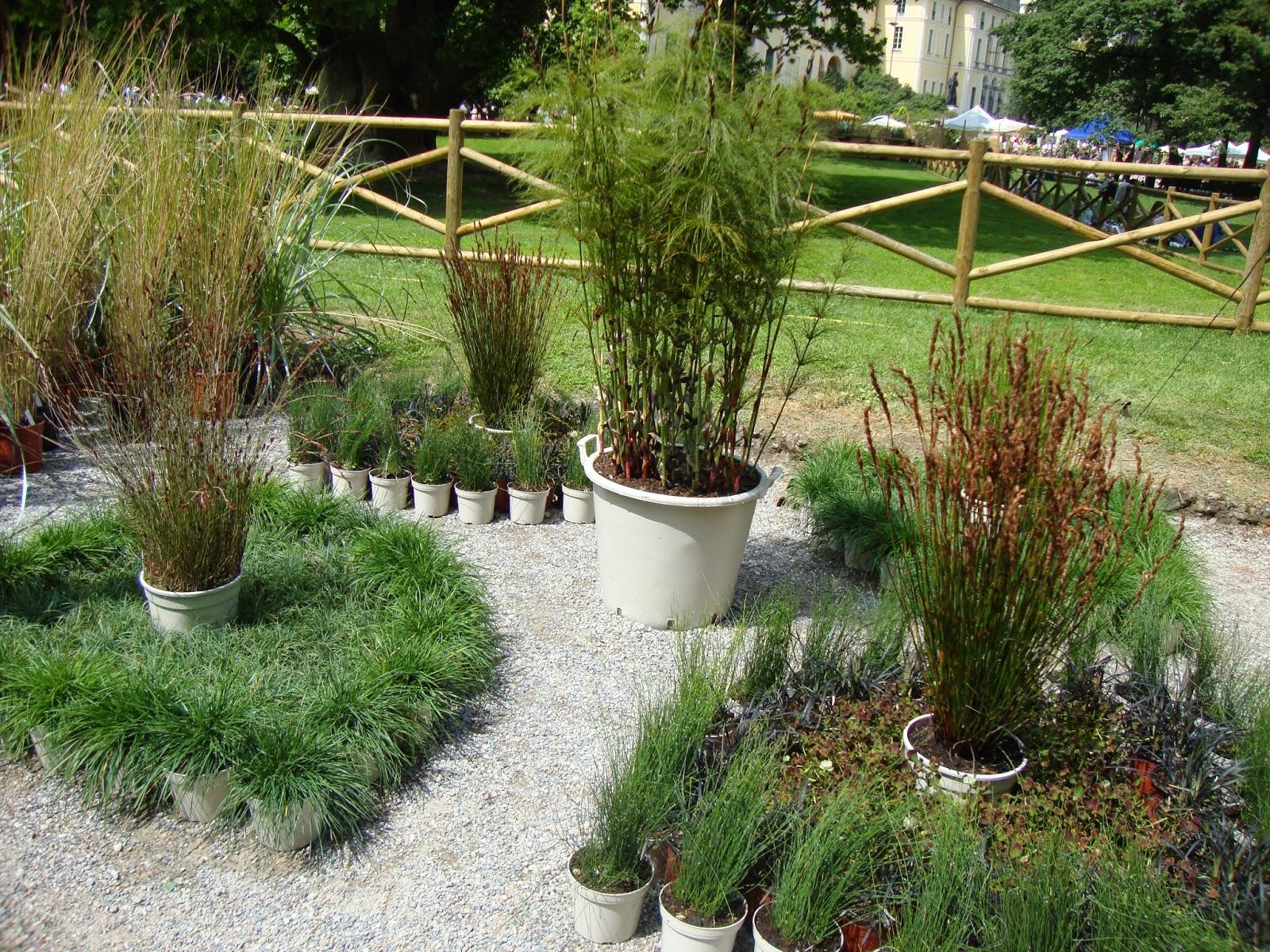 un piccolo giardino in città: orticola 2014: gli allestimenti - Piccolo Giardino Allitaliana