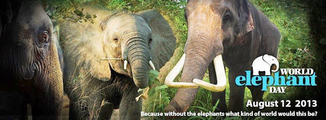 World Elephant Day 2013 Save Elephants from Extinction