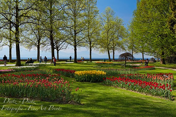Tulpenfest Morges (VD) - 22.04.2015