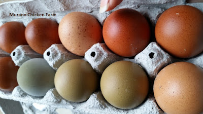 How to package farm eggs for sale