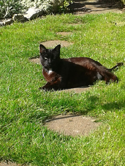 Dotty enjoying her new garden