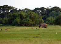 Rehe, Vögel, Elefant - deer, birds, elephant