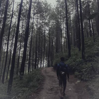 Lokasi Dan Tiket Masuk Ask Forest Pacet Mojokerto