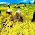 PT Pupuk Kujang Bantu Petani Tingkatkan Produksi