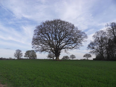 Picture-Of-A-Tree-No-Leaves-WB500-Test-Image