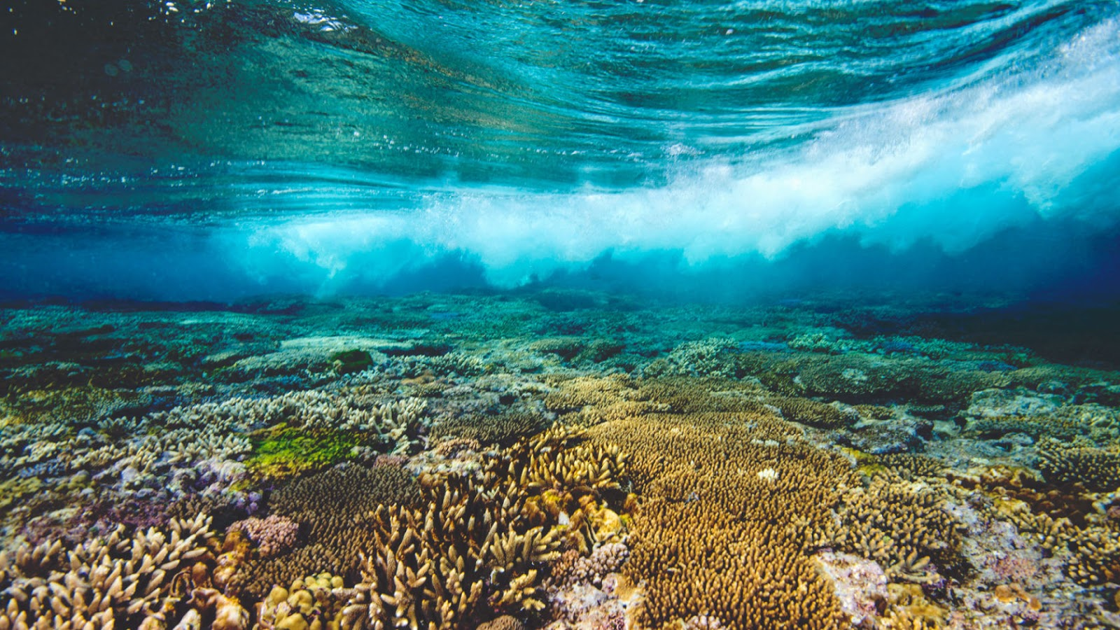 Grande Barreira de Corais  Great Barrier Reef   Austrália