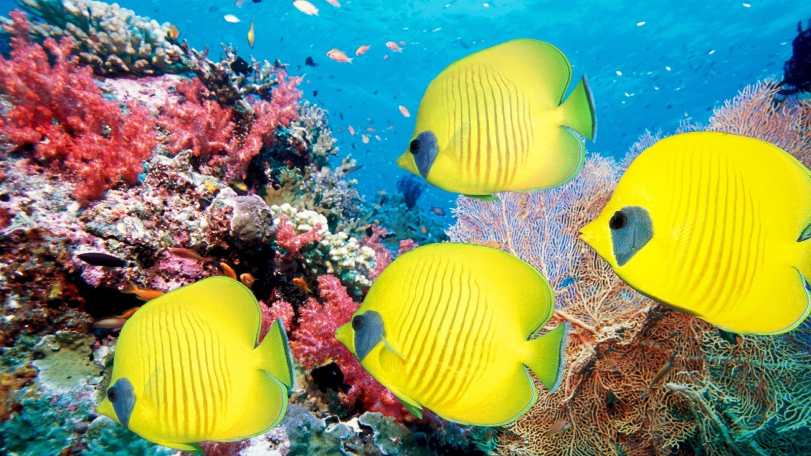 Underwater Sea Creatures And Other Animals Wallpapers