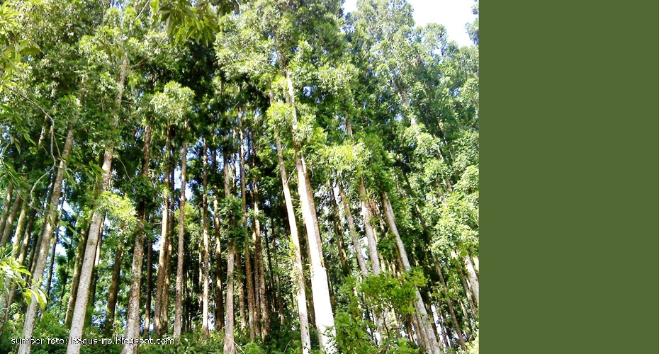 Kliping Tumbuhan  Flora di Indonesia Yang Hampir Punah