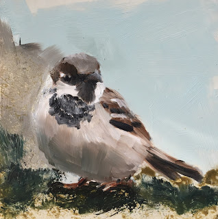 sparrow, daily painting by Philine van der Vegte