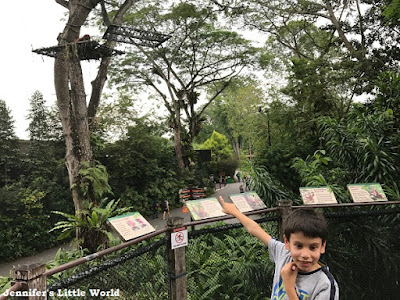 Singapore Zoo and Night Safari