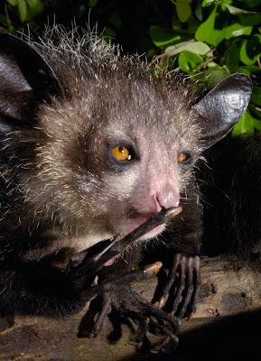 Inilah Makhluk Aneh Yang Paling Jelek Di Planet Bumi