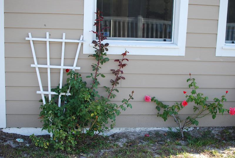 Florida garden grasshopper roses and hummingbird - Butterfly and hummingbird garden designs ...