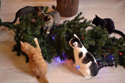 5 drole de chats