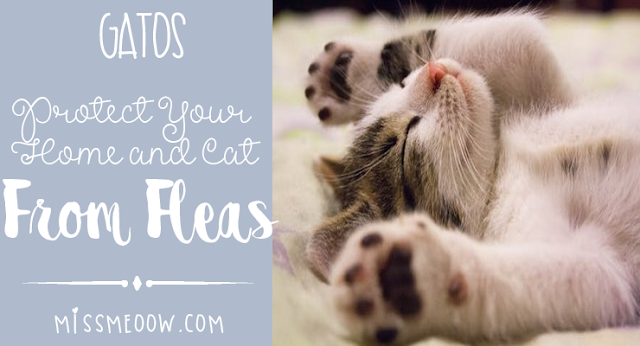 Protect Your Home and Cat from Fleas