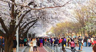 Keperluan Musim Semi Di Korea