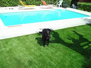 jardin de césped artificialcon mascotas