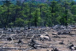 Pengertian Pencemaran Tanah, Penyebab, Dampak, dan Cara Mengatasinya