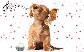 Fond d 39 cran de chien qui bouge total for Image de fond ecran qui bouge gratuit