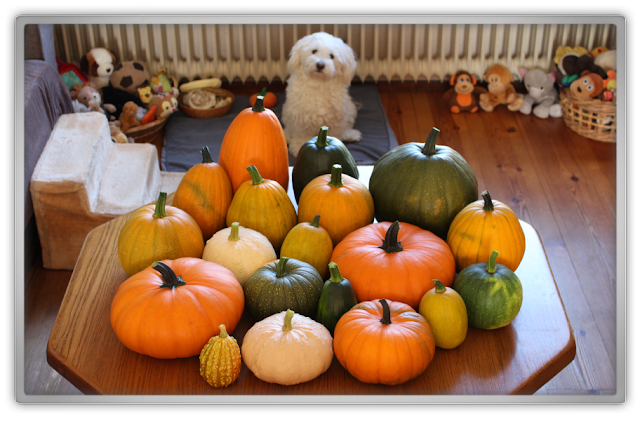 Mother of Pumpkins pumpkin harvest proud mommy got game of thrones beauty blogger kbeauty blog fall autumn september lifestyle daily life jofee maltese dog