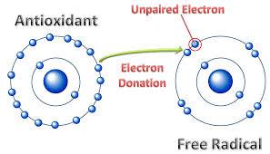 antioksidan bekerja cara menyumbangkan elektron bebas, superhero bernama antioksidan