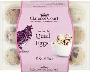 berapa harga telur puyuh hari ini?, harga telur puyuh, telur puyuh