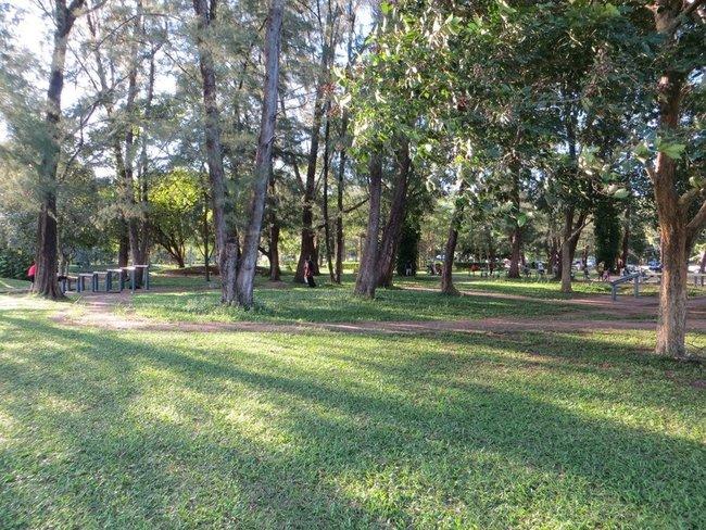 парк в краби таун газон