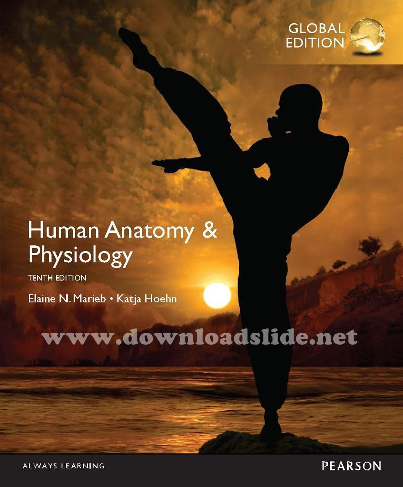 Ebook human anatomy physiology 10th edition by marieb global ebook human anatomy physiology 10th edition by marieb global edition fandeluxe Images