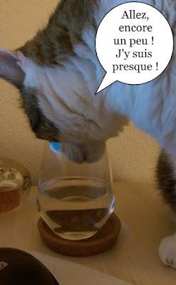 Le chat qui voulait boire au verre.