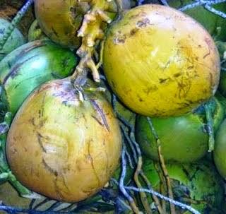 khasiat buah kelapa untuk pengobatan