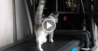 Her Human Discovered a Great Way to Get Kitty To Use the Treadmill
