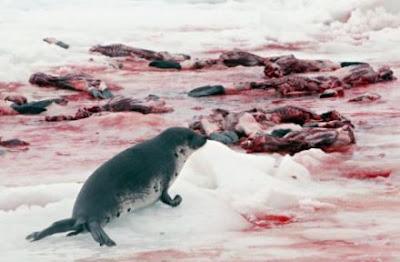 Futilidade e ausência de vigor sexual mantêm o mercado da matança de focas sempre em alta. Enquanto as madames, com suas vidas miseráveis no que se refere à própria existência, porém afortunadas no que tange o social, ficam com as peles das focas, os homens, insatisfeitos com o desempenho sexual, ficam o com o pênis do animal na esperança de revigorar a potência perdida.