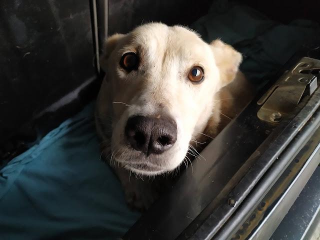 Άργος: Ανθρωπόμορφο κτήνος πυροβόλησε σκυλίτσα με καραμπίνα