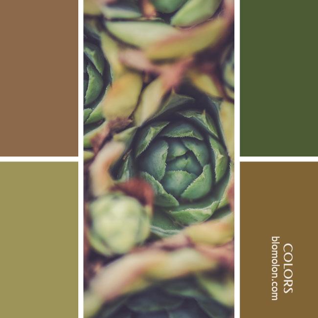 variedad_en_color_combinacion_10