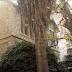 Τα στοιχειωμένα σπίτια της Αθήνας (photos)