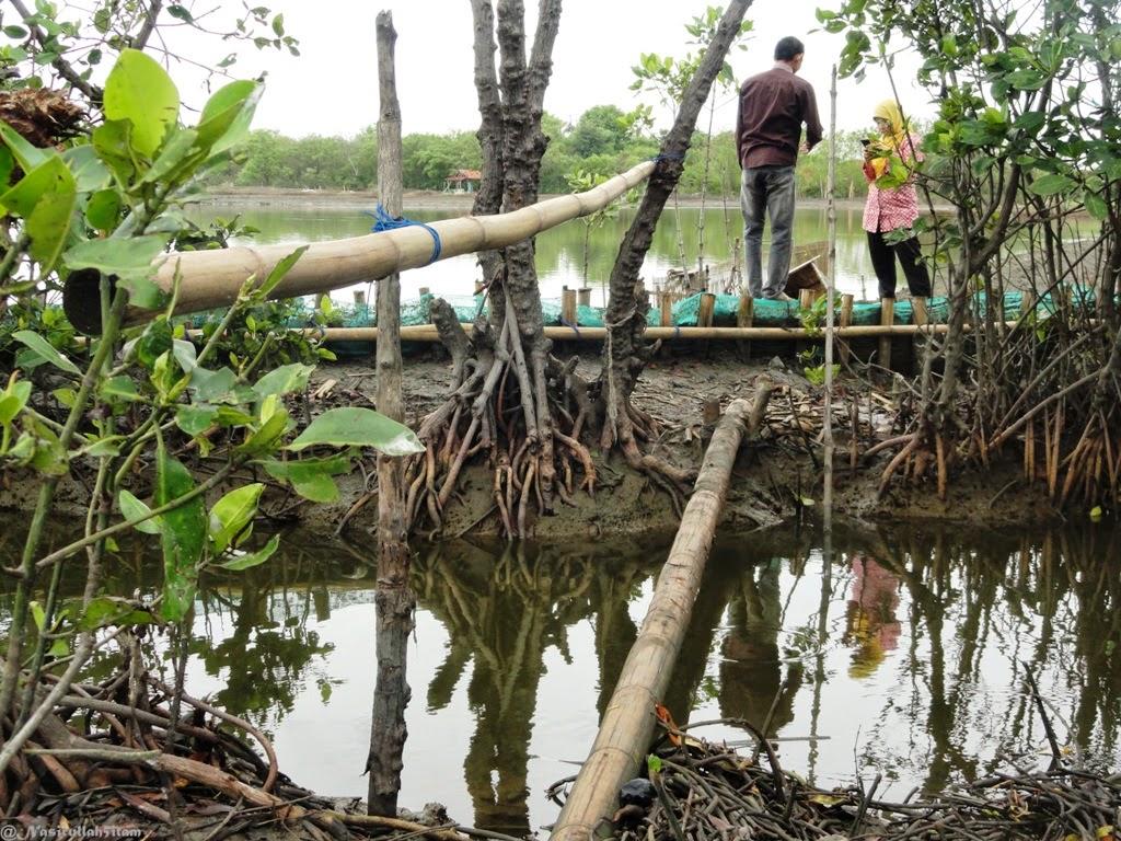 Titian kaki dari batang bambu dan serakan cangkang kerang