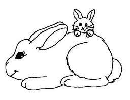 Cute animal rabbit coloring books sheet for kids drawing