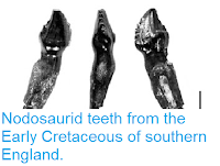 http://sciencythoughts.blogspot.co.uk/2013/07/nodosaurid-teeth-from-early-cretaceous.html