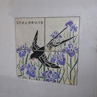 打上川治水緑地・ツバメとカキツバタ