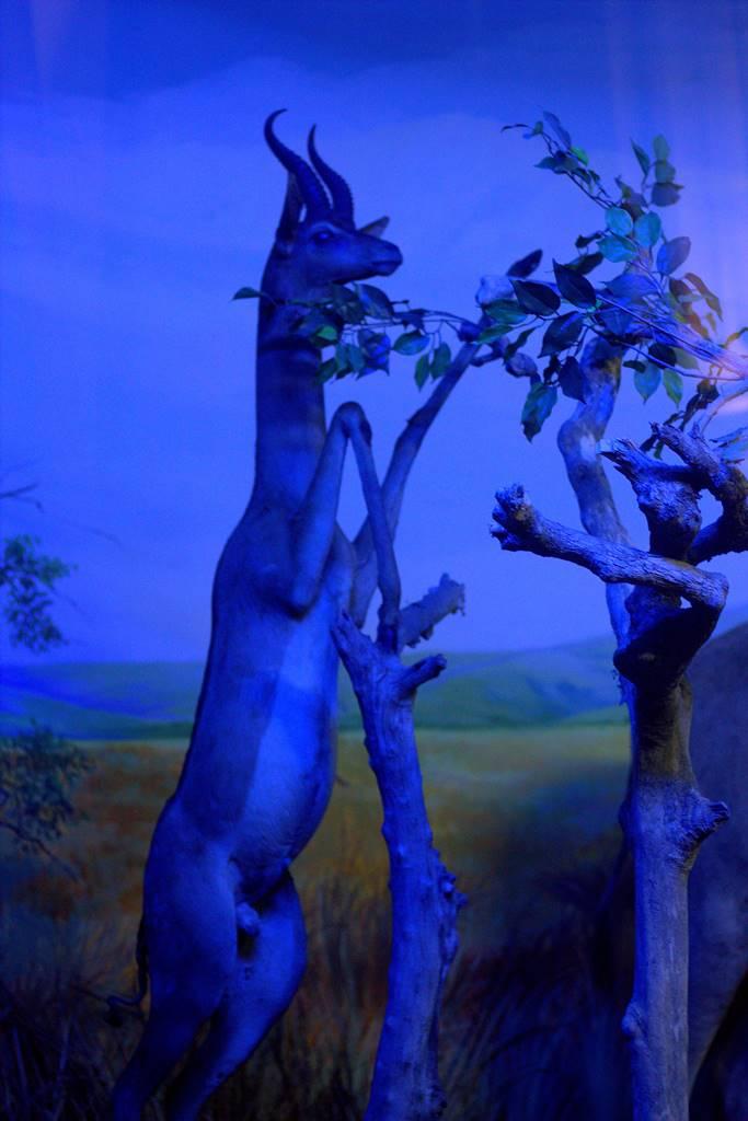 Diorama Rusa Berdiri Menjangkau Pucuk Pohon - Museum Satwa, Jatim Park #13