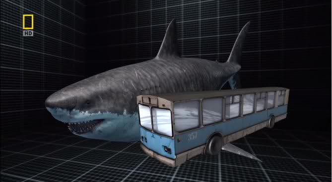 SHARKPUNK: Could Megalodon prey on a Blue Whale?