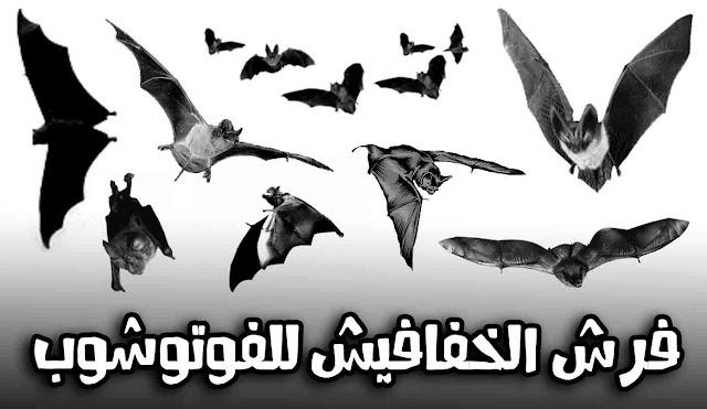 تحميل فرش الخفافيش فوتوشوب