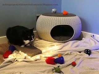 kot na drapaku, drapak dla kota, legowisko dla kota, zabawki kotów