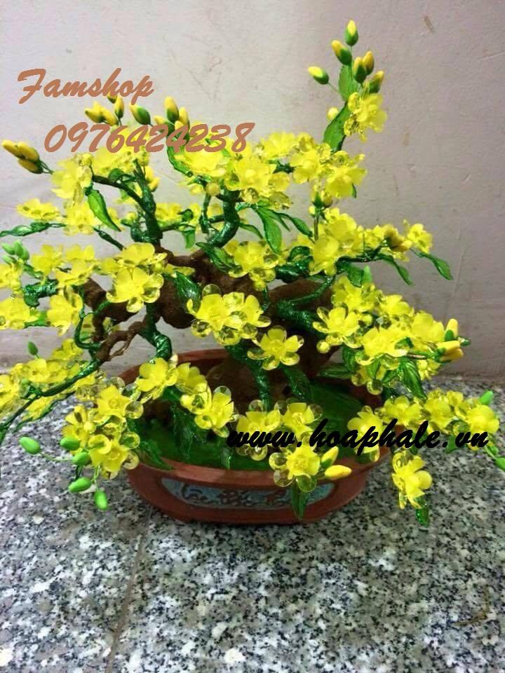 Goc bonsai cay hoa mai o Dai Co Viet