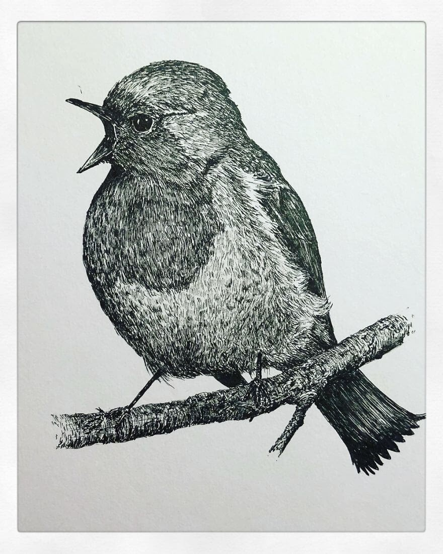 07-Robin-Bas-Geeraets-Black-and-White-Drawings-of-Birds-www-designstack-co