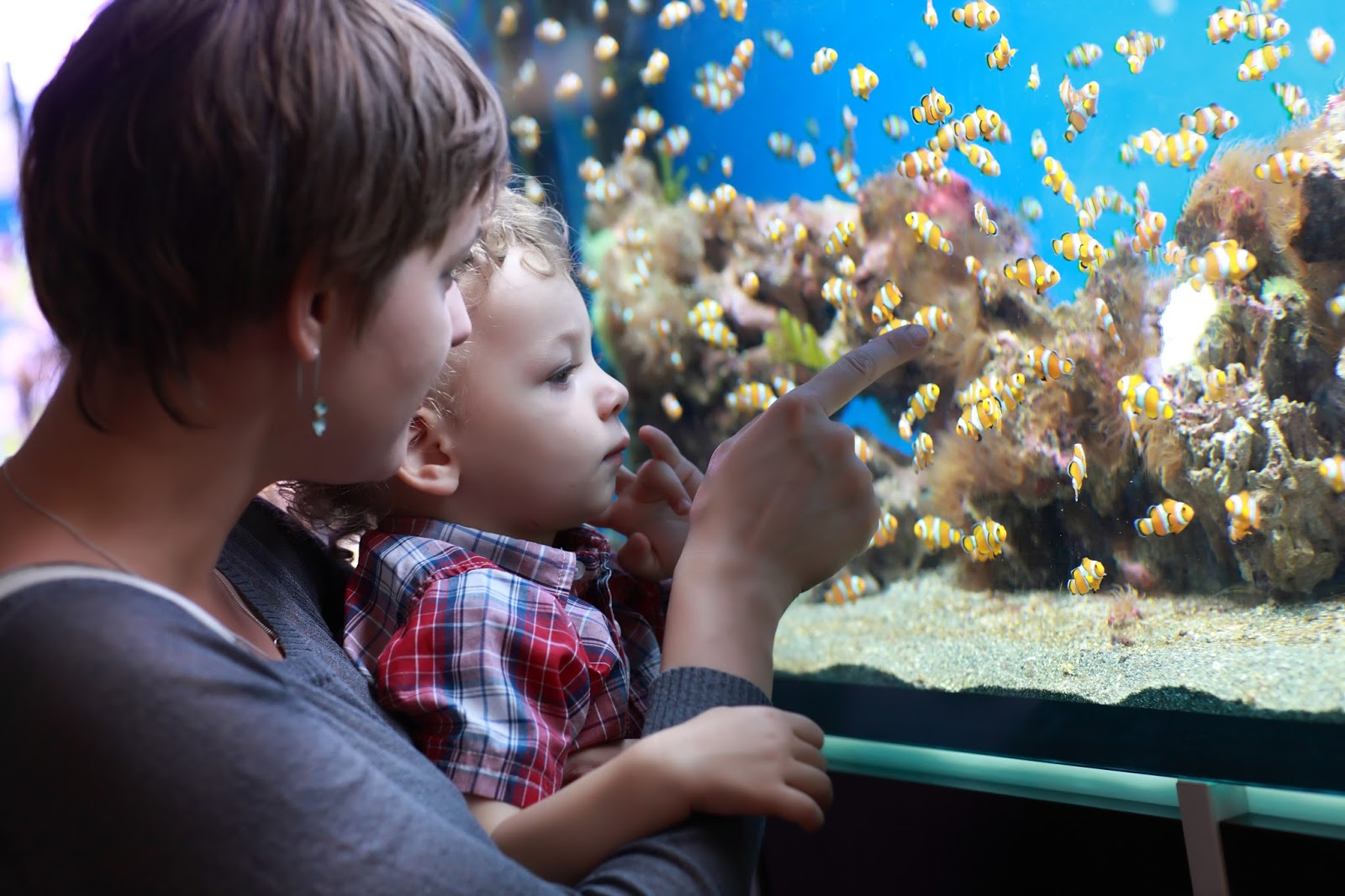 Teachable Moments: First Pets - Family Looking at a Fish Tank