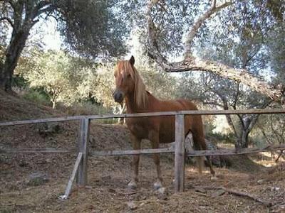 Στον κάμπο Πλακωτής Θεσπρωτίας πυροβολήθηκε και σκοτώθηκε ένα αλογάκι...